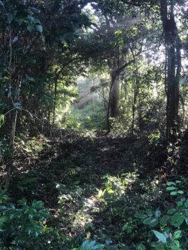 Sun lit Jungle in Mexico on the trail topside to the world's largest underwater cave system. Sun light beaming like subtle lasers through the tree branches